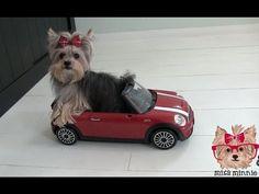Amazing Cute Dog Tricks with Tiny Dog Misa Minnie - YouTube