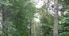 Blog über das Reisen und wandern. Zurzeit vorallem Wandern in der Schweiz. Fernziel ist der Fernwanderweg E1 Bern, Switzerland, Summertime, Trail, Outdoor, Plants, Adventure, Hiking, Forests