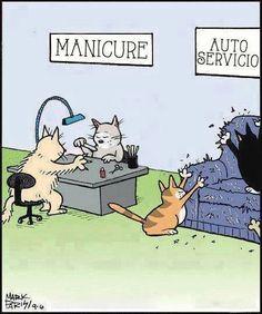 Manicure para gatos