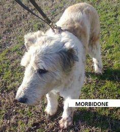 MORBIDONE, un cane che non è mai stato cane. Dopo 11 anni merita una casa! http://adottauncaneanziano.blogspot.it/2014/01/morbidone-un-cane-che-non-e-mai-stato.html