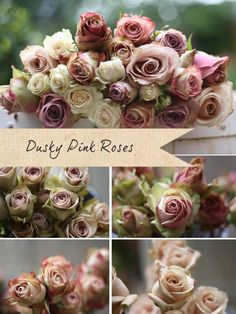 "Dusky pink roses vintage roses. Great site ""Get to know your wedding flowers"" says, Amnesia rose is another great choice for a dusky pink vintage rose, we describe it as slightly 'dirty pink' with a more brown tinge to the edge of the petals.  Quicksand offers a softer pink tone and if you are looking for a touch of green around the edge the Upper secret or Peppermint."
