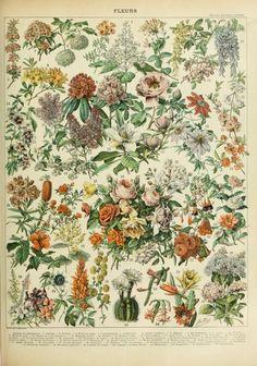 'Nouveau Larousse' illustré dictionnaire universel encyclopédique publié sous la direction de Claude Augé. Published 1898