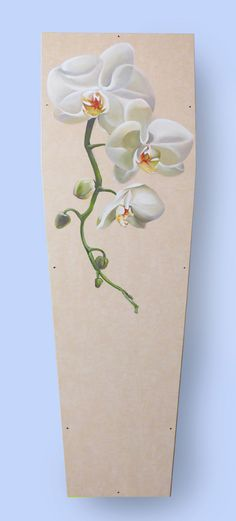 grafkist orchidee