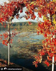 #Repost @robertacostanzi  #lagotrasimeno #lago #trasimeno #trasimenolake #trasimenoland #fotolaghiditalia #lake #lake_in #acqua #natura #umbria #umbriainfoto #umbriain #umbriagram #autumn #autunno #umbriaunafotoalgiorno