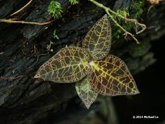 The jungle of Borneo: Visiting orchids on a limestone hill