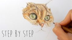 Step by Step   How to draw, color realistic cat fur and nose with colore...