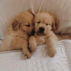 Καλωσορίστε το νέο σας κουτάβι Cute Baby Dogs, Cute Dogs And Puppies, Bulldog Puppies, Cute Baby Animals, Doggies, Teacup Chihuahua, Cute Teacup Puppies, Bear Dog Breed, Teddy Bear Dog