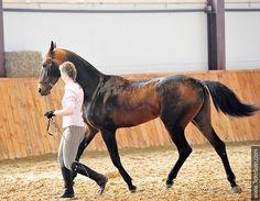 Akhal-teke horses for sale - Tekepbir-Kan(Rekhimdar - Tram-Kan)