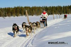 Sledgedog team