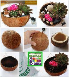 Plantando na casca de coco