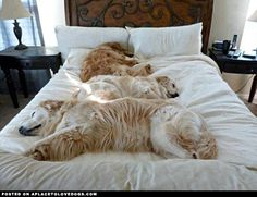 Want to take back your bed? These guys would love a bed of their own from shopmasterpets.com