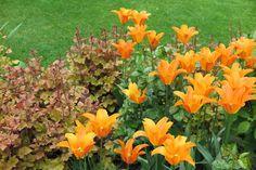 Herbst: Weichenstellung für den Garten - Gartenplan Esken & Hindrichs GmbH Plants, Landscape Nursery, Daffodils, Shade Perennials, Planting, Autumn, Lawn And Garden, Plant, Planets