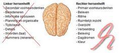 Deel 2 van 6 in de serie Hersenen1. Hersenhelften2. Hoe komt dat zo?3. Talenten van de linker hersenhelft4. Talenten van de rechter hersenhelft5. Samenwerking hersenhelften6. Zwakke linker hersenhelftBij beelddenkers is de rechter hersenhelft sterker ontwikkeld dan de linker hersenhelft. Doordat de rechter hersenhelft domineert is de linker hersenhelft zwakker. Iedere hersenhelft heeft zijn eigen specifieke …