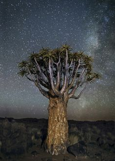 Beth Moon - amazing, incredible, beautiful, stunning, leaves me absolutely speechless photography <3