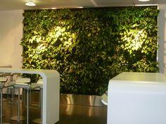Lebendige Räumlichkeiten – eine grüne Wand beim Kunden #businessfengshui www.apprico.de