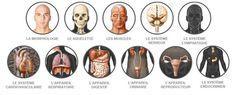 Le corps humain virtuel interactif