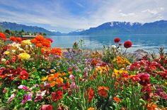 Fleurs dans les Alpes suisses Vevey port Banque d'images