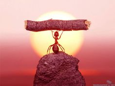Behold; The Strongest, yet smallest in the world of Great Achievers