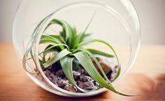 Tener una planta en tu escritorio podría volverte más productivo