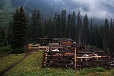 Corrals at Halfway Hut - Banff National Park
