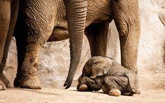 aw, baby #elephant
