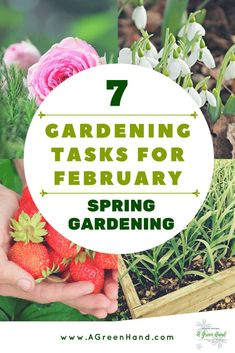 What gardening plans should you start at such an early part of the year? Here, we take a look at several gardening tasks and projects for February. Spring Garden, Winter Garden, Growing Winter Vegetables, Starting Seeds Indoors, Home Vegetable Garden, Beautiful Flowers Garden, Organic Gardening Tips, Garden Pests, Garden Planters