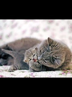 Mother love.  Precious.   :o)