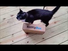Stewie the Cat Unboxing his KitNipBox