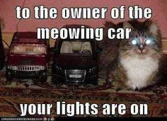 Cat cars