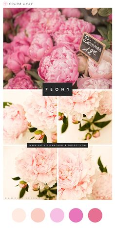 Color Lust     Peony Pink via www.StyleMachineBlog.com #ColorPalette #StyleFinds