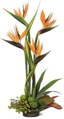 Bird of Paradise Centerpiece