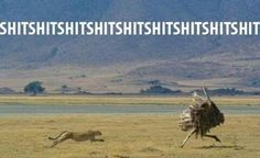 How I feel running bases in kickball!