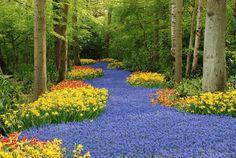 Colorful garden design and garden decoration - The largest flower garden in the world Tulips Garden, Daffodils, Keukenhof Holanda, Spring Bulbs, Colorful Garden, Parcs, Large Flowers, Nice Flower, Hummingbirds