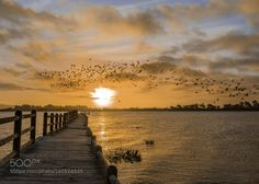 Fly Free by johnburland
