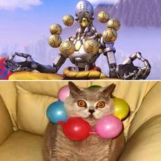 well i don't  think that  zenyatta cat  discover  harmony