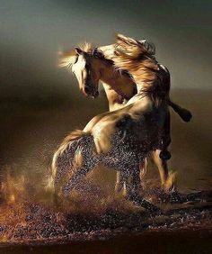 Horses Serve Whoop Ass As Well. All The Pretty Horses, Beautiful Horses, Animals Beautiful, Painted Horses, Cavalo Wallpaper, Horse Wallpaper, Amor Animal, Majestic Horse, White Horses