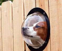 Dog observation point!  http://data.whicdn.com/images/23747358/33-weird-gadgets_thumb.jpg