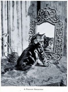 """""""A Pleasant Reflection."""" Illustration from Happy Cats, 1942. Source: janwillemsen on Flickr."""