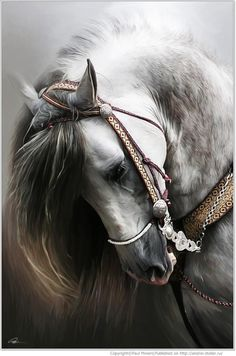 Gray horse ~ stunning shot!