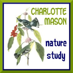 A broad overview of Charlotte Mason styled nature study for homeschool.