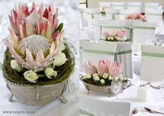 Protea table arrangements in antique holders xAx