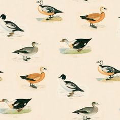 Golden Eye (LW46/1) - Linwood Wallpapers - A wallpaper featuring large scale paintings of ducks in various colours on a cream background. Please request a sample for a true colour match. Pattern repeat is 104cm.  Paste-the-wall product.