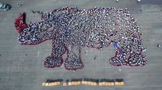 World Rhino Day marked in Taiwan with human chain and red stickers