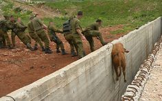 animal rescued by IDF soldiers