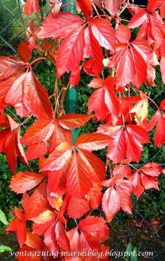 Von Tag Zu Tag   Maries Blog: Mein Garten Im Oktober