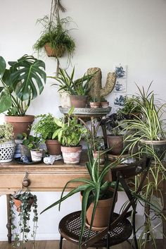 Great Ideas to Display House Plant Indoor – Onechitecture – House Plants Interior Plants, Interior Exterior, Jungle Decorations, Cactus Plante, Home Decoracion, Deco Nature, Decoration Plante, Plants Are Friends, Outdoor Plants