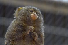 A small monkey | Flickr - Photo Sharing!