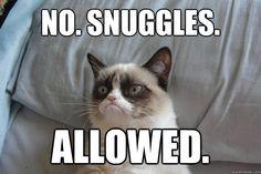 no snuggles allowed - Pillow Grumpy Cat