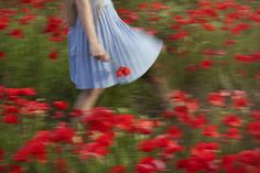 Garden of poppies | by nikaa
