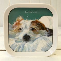 The Little Dog Scruffy Love Trinket Tray from The Little Dog Laughed. Buy The Little Dog Scruffy Love Trinket Tray at best price from Arcade Wales UK Dog Lover Gifts, Dog Lovers, Melamine Tray, Love Design, Little Dogs, Cool Stuff, Dish, Popular, Free